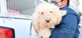 Rescatan en Ecatepec a dos canes que estuvieron abandonados varios meses en una azotea